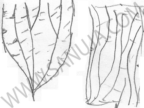 Rhabdinopora