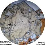Staurolite-PPL
