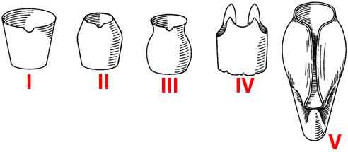aperture shapes