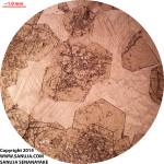 Grossular Garnet - PPL