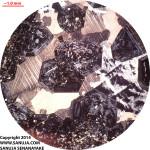 Grossular Garnet - XPL
