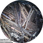 Spinifex Texture - 4x XPL (~5mm across)